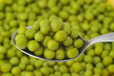 Free Green Peas Royalty Free Stock Images - 8623829