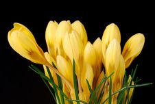 Free Flower Stock Image - 8623841