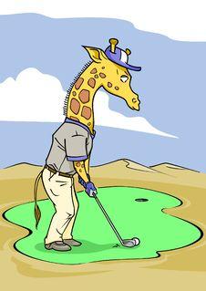 Golfer Putting Giraffe Royalty Free Stock Image