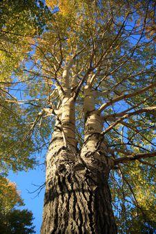Free Tree Royalty Free Stock Photo - 8624115