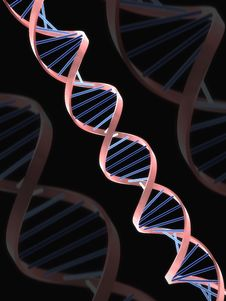 Free DNA Royalty Free Stock Photography - 8624237