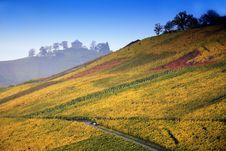 Free Colorful Autumn Vineyard Stock Image - 8625801