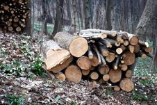 Stacked Logs And Wood Stock Photography