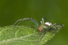 Free Orb-web Spider Macro Stock Image - 8628001