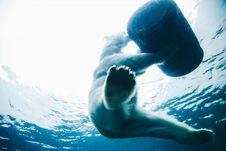 Free Polar Bear Royalty Free Stock Photo - 86217225