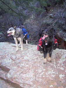 Free Pups Royalty Free Stock Photo - 86218435