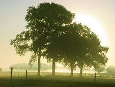 Free Iconic Oaks, Four Of Them Stock Images - 86218494