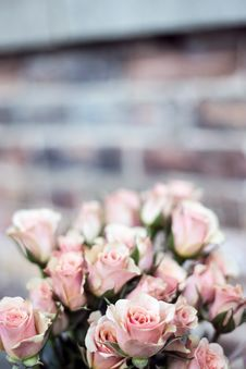 Free Pink Rose Bouquet Of Focus Photography Royalty Free Stock Images - 86219849