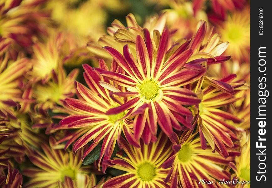 Floral Fireworks