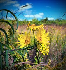 Free Yellow Petaled Flowers On Bloom At Daytime Stock Photo - 86220360