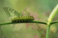 Free Green Caterpillar On Green Plant Stem Royalty Free Stock Photo - 86221135