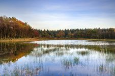 Free Shallow Lake And Surrounding Forest Stock Photos - 86222263
