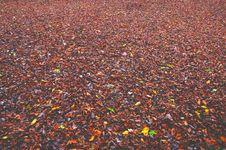 Free Fallen Autumn Leaves Royalty Free Stock Photos - 86226148