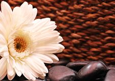 Free White Flower With Stones Royalty Free Stock Photo - 86226595