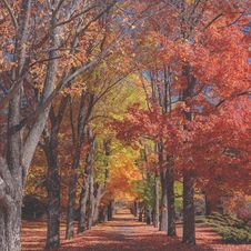 Free Path Through Autumn Trees In Park Stock Photos - 86227313