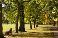 Free Person Sitting On Bench Near Tree Lines Stock Photos - 86227443