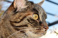 Free Portrait Of Domestic Cat Royalty Free Stock Photos - 86228538