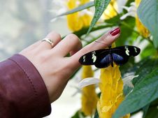 Free Woman With Butterfly On Finger Stock Images - 86230944