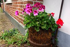Free PUBLIC DOMAIN DEDICATION Digionbew 10. June July Rusty Pot Of Flowers LOW RES DSC03585 Stock Image - 86245021
