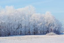Free Snow Covered Fields And Forest Stock Image - 86246171