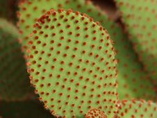 Free Macro Photography Of Green And Red Leaf Plant Stock Photos - 86253733