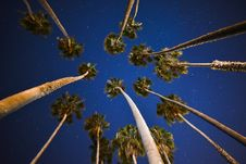 Free Palm Trees Under Blue Skies With Stars At Nigh Time Royalty Free Stock Image - 86257046