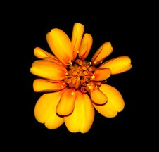 Free Orange And Yellow Petaled Flower Hd Photography Royalty Free Stock Photography - 86257187