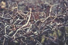 Free Twigs In A Forest Royalty Free Stock Photo - 86258805