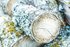 Free Brown And Green Cut Log With Algae Royalty Free Stock Photos - 86281068
