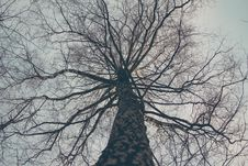 Free Low Angle View Of Bare Tree Against Sky Royalty Free Stock Photography - 86283517