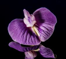 Free Purple And White Orchid In Shallow Focus Lens Royalty Free Stock Photos - 86283958