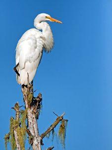 Free White Bird Perching On Brown Tree Trunk During Daytime Royalty Free Stock Photos - 86284068