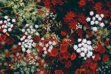 Free Flowers Mixture Royalty Free Stock Photos - 86299818
