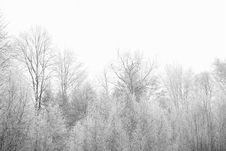 Free Frozen Trees Royalty Free Stock Photography - 86299827