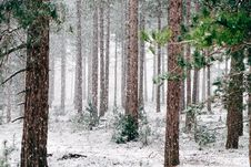Free Frozen Forest Royalty Free Stock Photos - 86299928