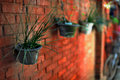 Free Pot On The Red Brick Wall Royalty Free Stock Photo - 8638345