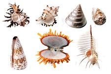 Free Shells Stock Photos - 8630173