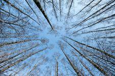 Free Trees Crown Stock Photo - 8631390