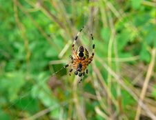 Free Spider 22 Royalty Free Stock Images - 8631919