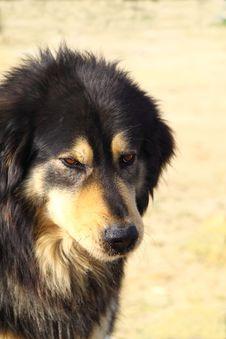 Free Dog, Light Background. Stock Photos - 8632443