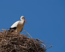 Free Turkish Stork Royalty Free Stock Photography - 8632707