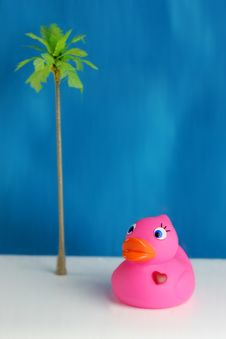 Free Rubber Duck Stock Photography - 8633102