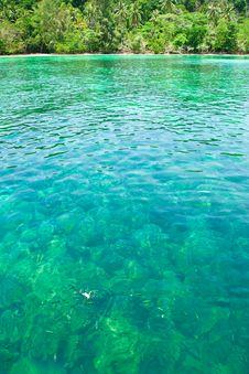 Free Fish In Clear Water. Stock Photos - 8634243