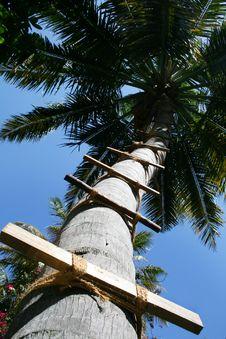 Free Palm Stock Photo - 8635380