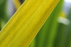 Free Green Leaf Royalty Free Stock Images - 8636769