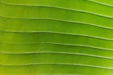 Free Green Leaf Stock Photography - 8637072