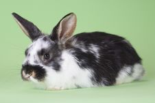 Free Spotted Bunny, Isolated Stock Images - 8637744