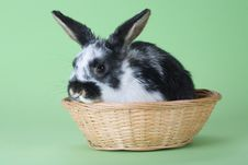 Free Spotted Bunny In The Basket, Isolated Stock Photography - 8637762