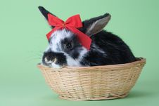 Free Spotted Bunny With Red Bow Tie, Isolated Stock Image - 8637801