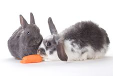 Free Two Bunny And A Carrot, Isolated Royalty Free Stock Image - 8637956